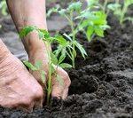 Zanim przystąpimy do uprawy warzyw