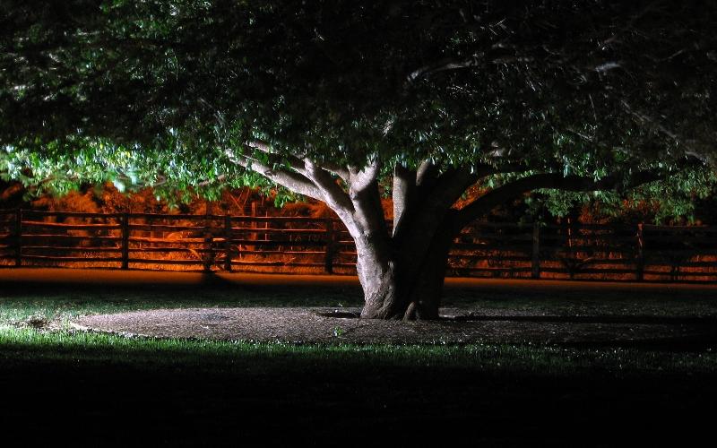 Jak Wykonać Oświetlenie Ogrodu Forum Ogrodnicze