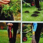 Jesienna pielęgnacja trawnika