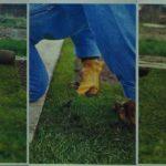Układanie trawnika z darni