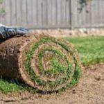 Trawnik jak założyć