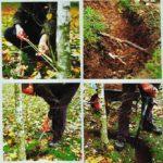 Sadzenie dużych drzew