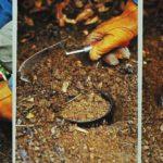 Sadzenie bulw