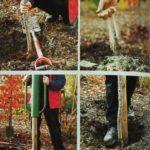 Sadzenie i palikowanie drzewa