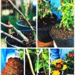 Wybór roślin
