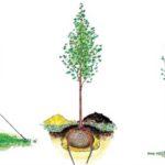 Sposób sadzenia roślin.